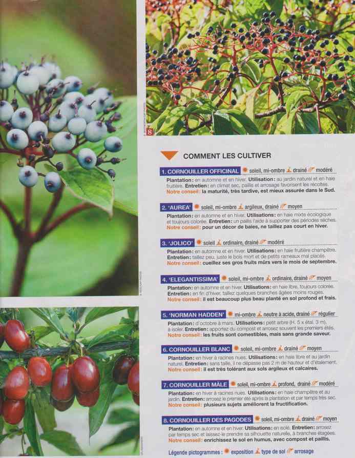 au jardin - Page 6 1b22