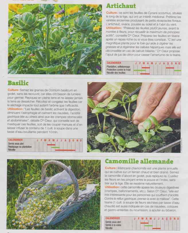 les plantes qui soignent - Page 16 1b25