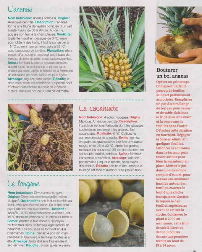 au jardin - Page 4 1c15