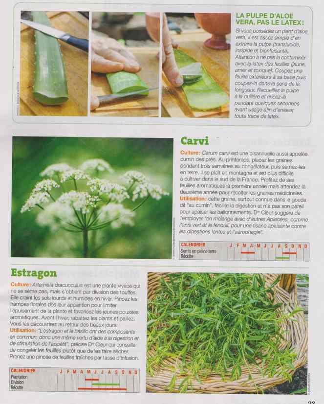 les plantes qui soignent - Page 16 1c19