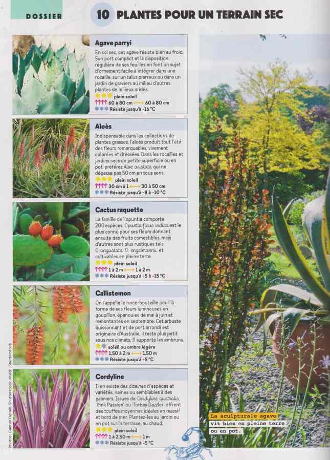au jardin - Page 26 1c21