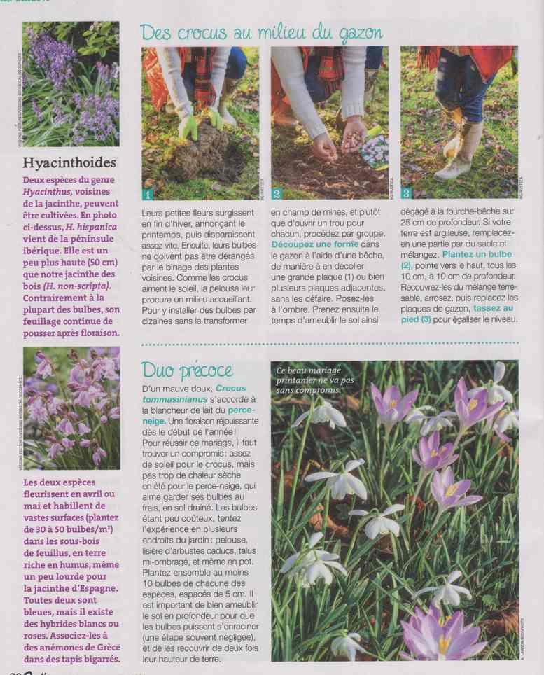 au jardin - Page 29 1c22