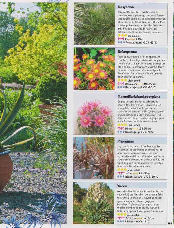 au jardin - Page 26 1d20