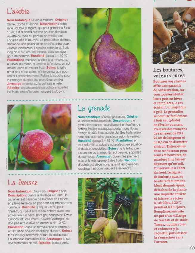 au jardin - Page 4 1e13