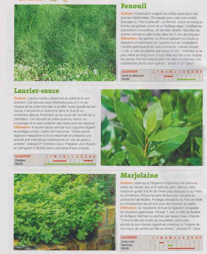 les plantes qui soignent - Page 16 1e15