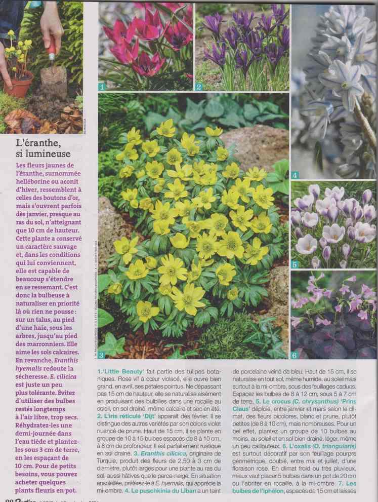 au jardin - Page 29 1e16