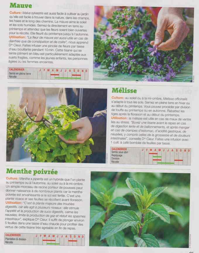 les plantes qui soignent - Page 16 1f15