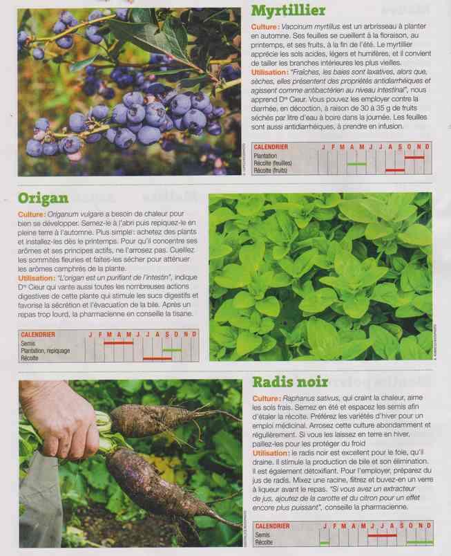 les plantes qui soignent - Page 16 1g15