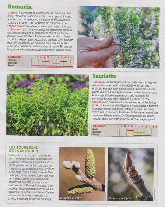 les plantes qui soignent - Page 16 1h14