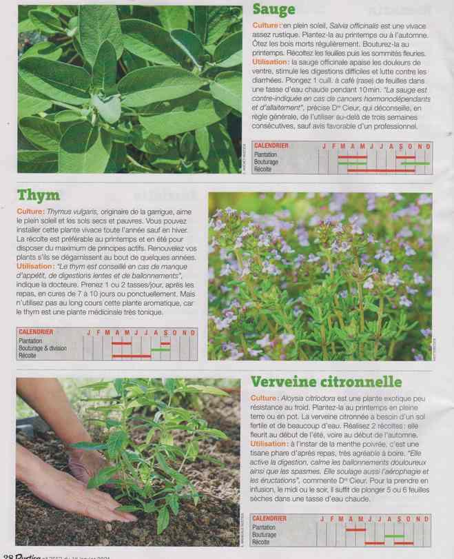 les plantes qui soignent - Page 16 1i10