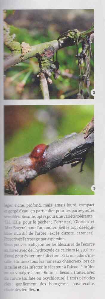 les maladies au jardin - Page 2 20a10