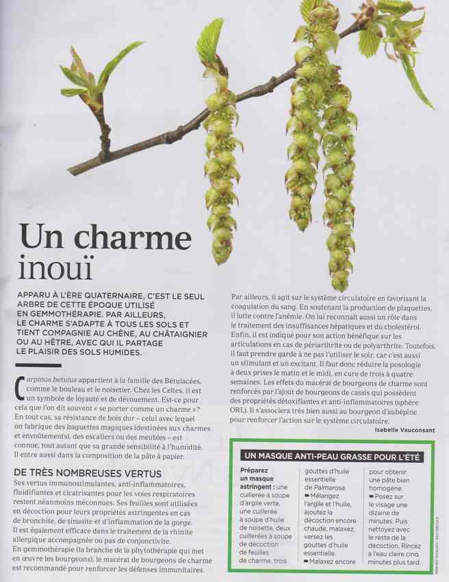 les plantes qui soignent - Page 12 216