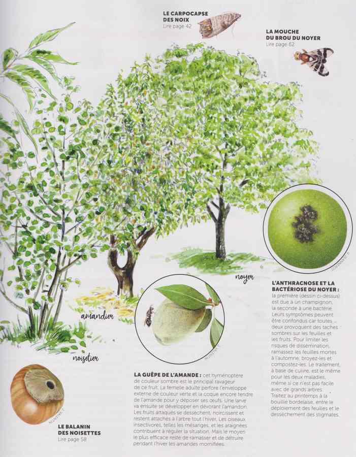 les maladies au jardin - Page 2 21a10