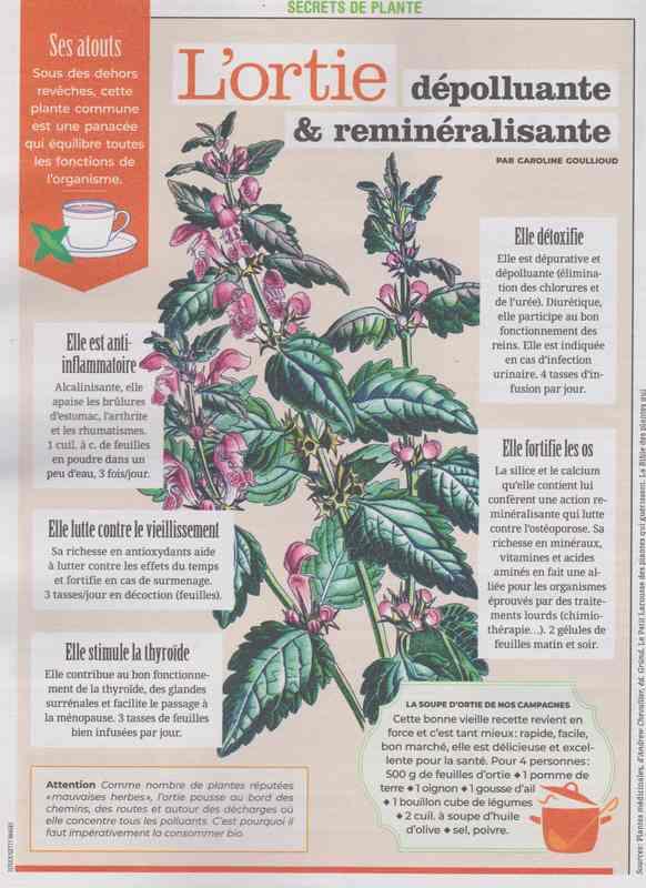 les plantes qui soignent - Page 13 227