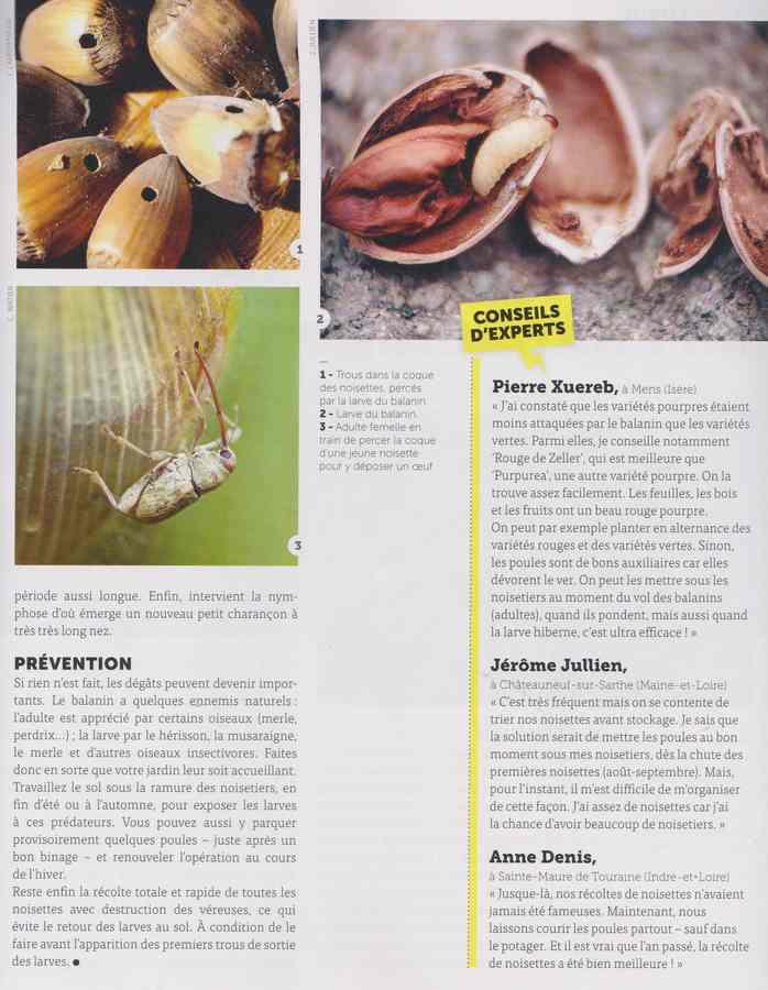 les maladies au jardin - Page 2 22a10