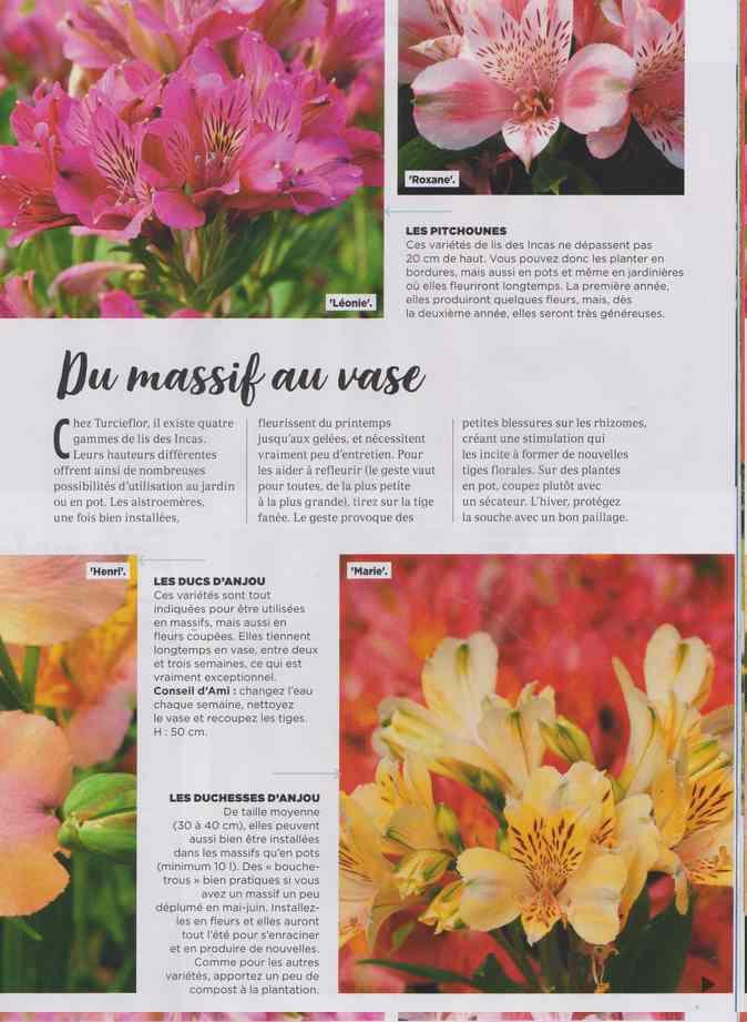 au jardin - Page 24 22a12