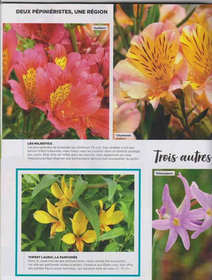 au jardin - Page 24 22b11