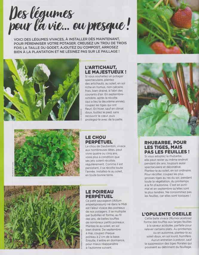 au jardin - Page 16 2312