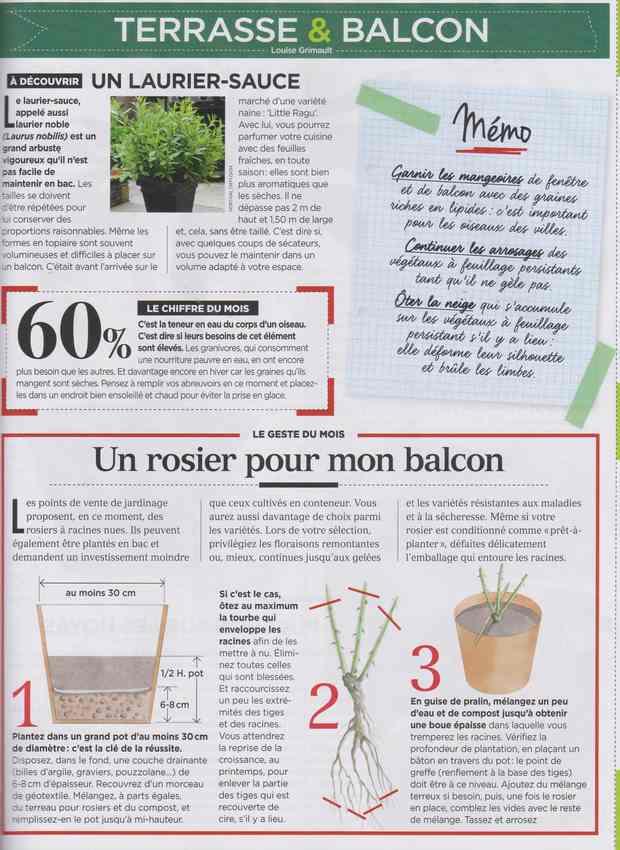 au jardin - Page 5 232