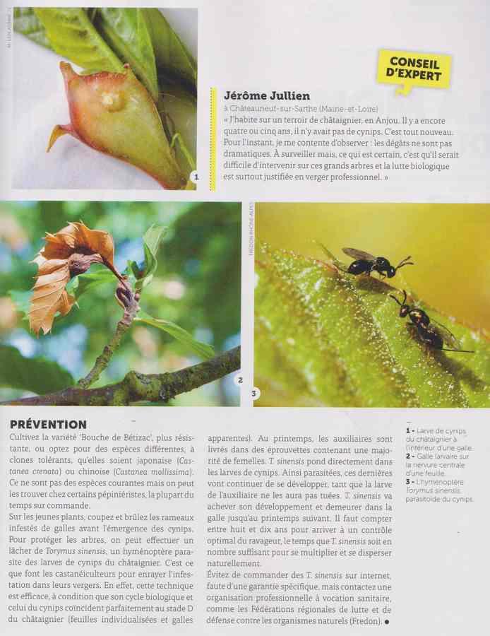 les maladies au jardin - Page 2 24a10