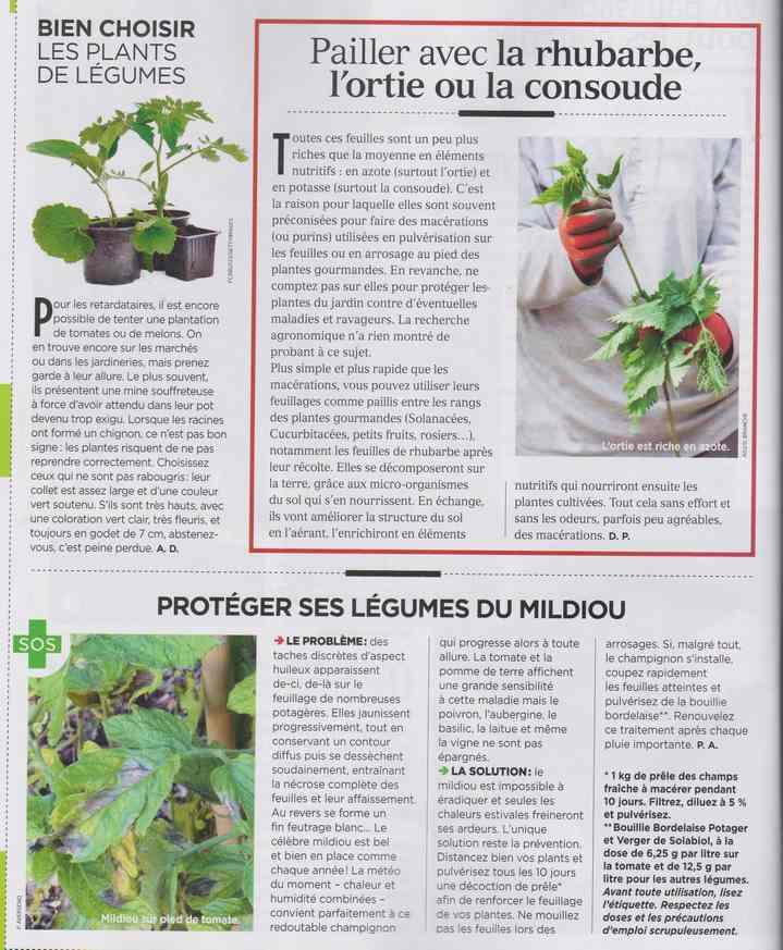 au jardin - Page 26 250