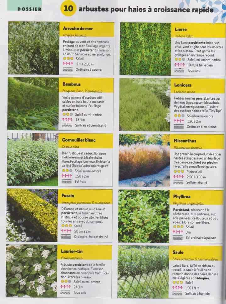 au jardin - Page 29 251