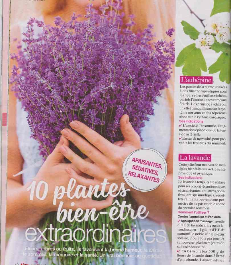 les plantes qui soignent - Page 19 2513