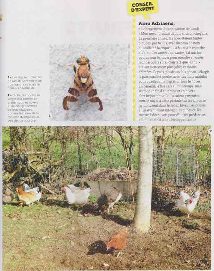les maladies au jardin - Page 2 25a10