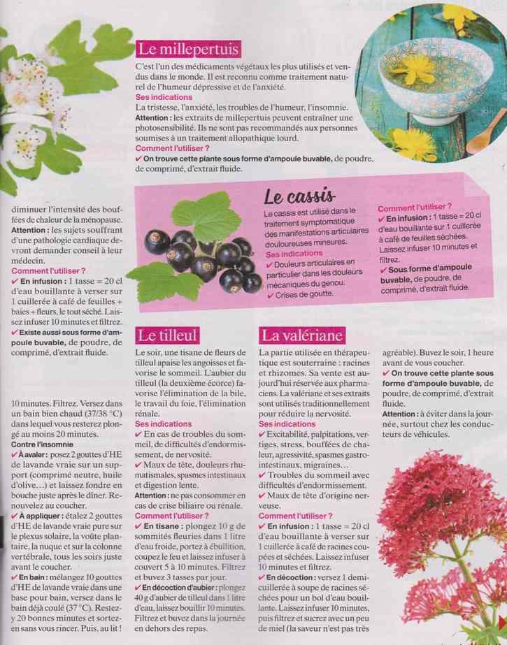 les plantes qui soignent - Page 19 25a12