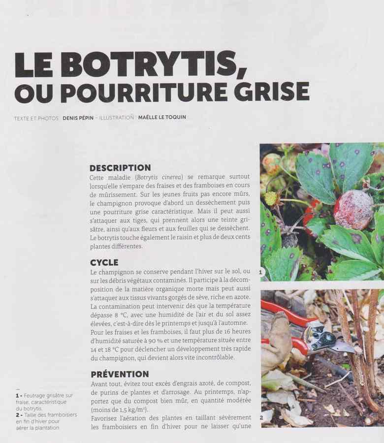 les maladies au jardin - Page 3 2711