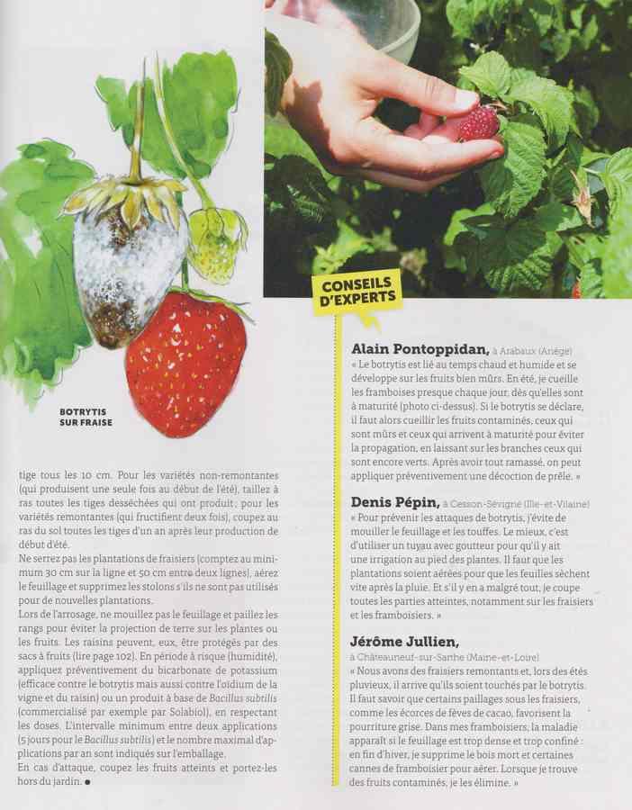 les maladies au jardin - Page 3 27a10