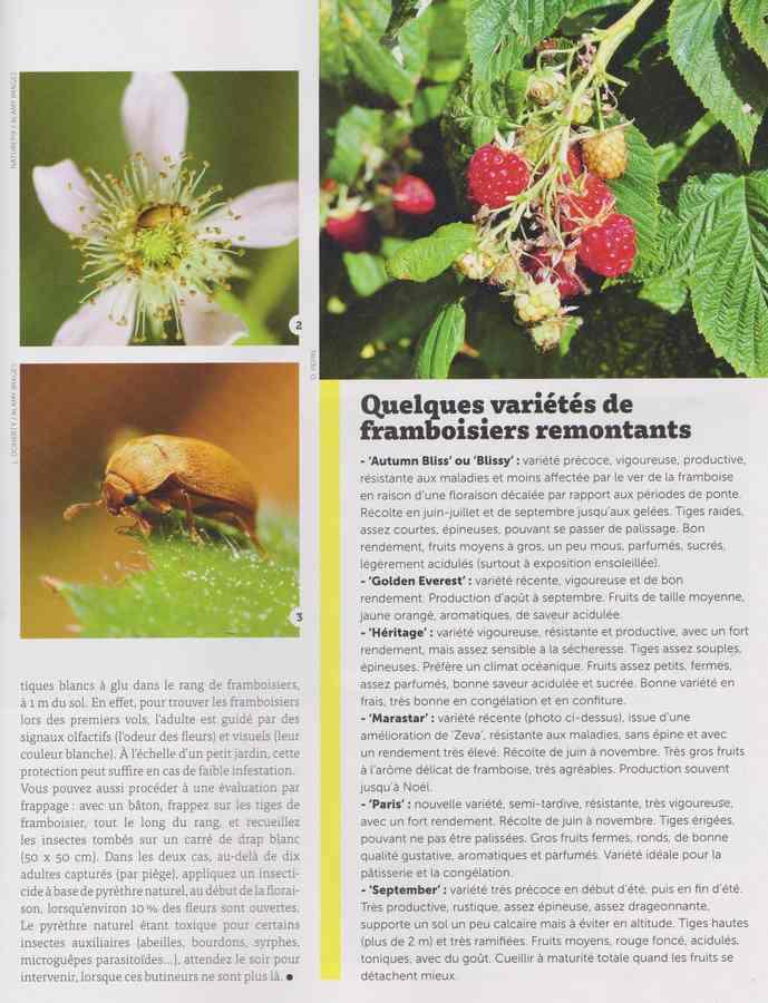 les maladies au jardin - Page 3 28a10