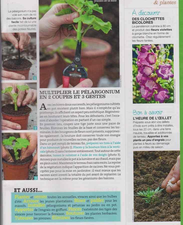 au jardin - Page 40 2911