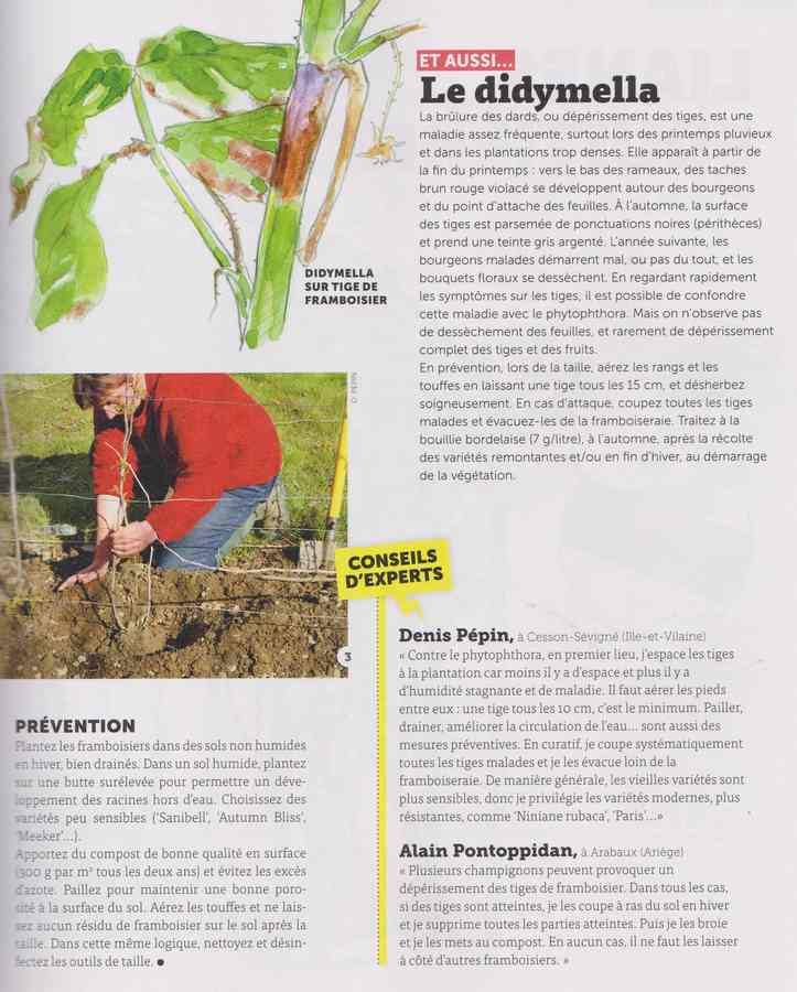 les maladies au jardin - Page 3 29a10