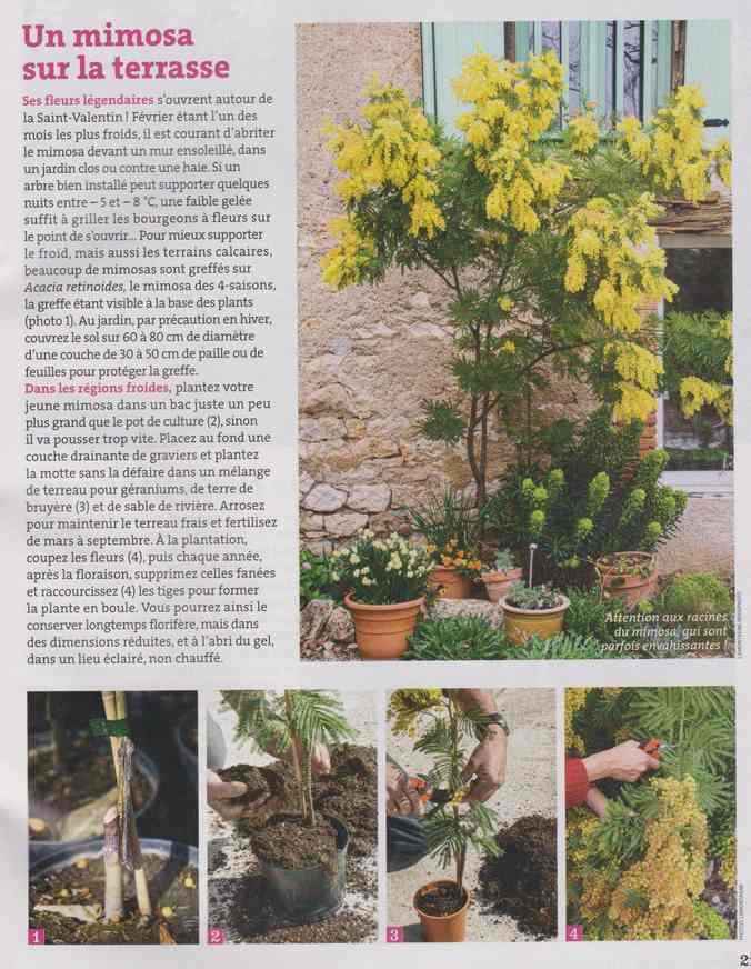 au jardin - Page 6 2a17