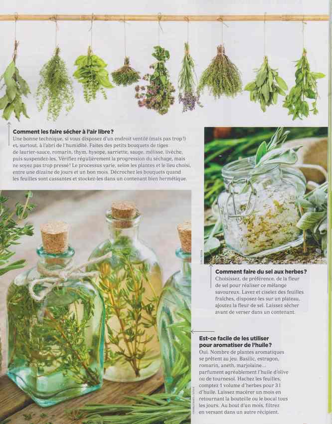 au jardin - Page 39 2b10