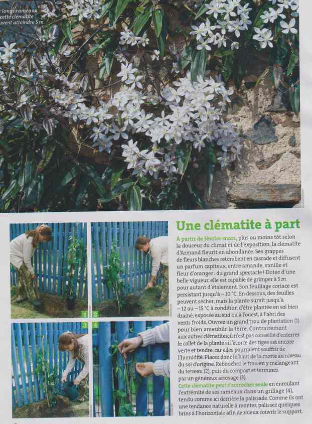 au jardin - Page 6 2b15