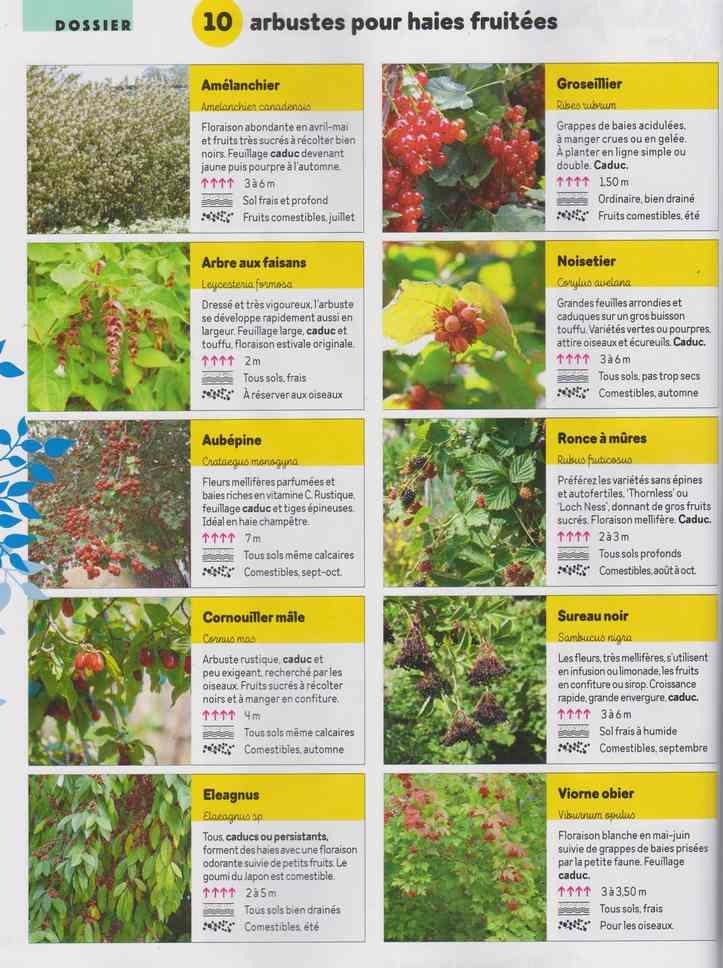 au jardin - Page 29 2b22