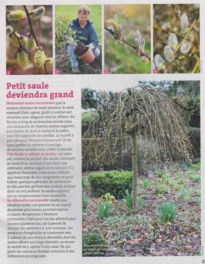 au jardin - Page 6 2c14