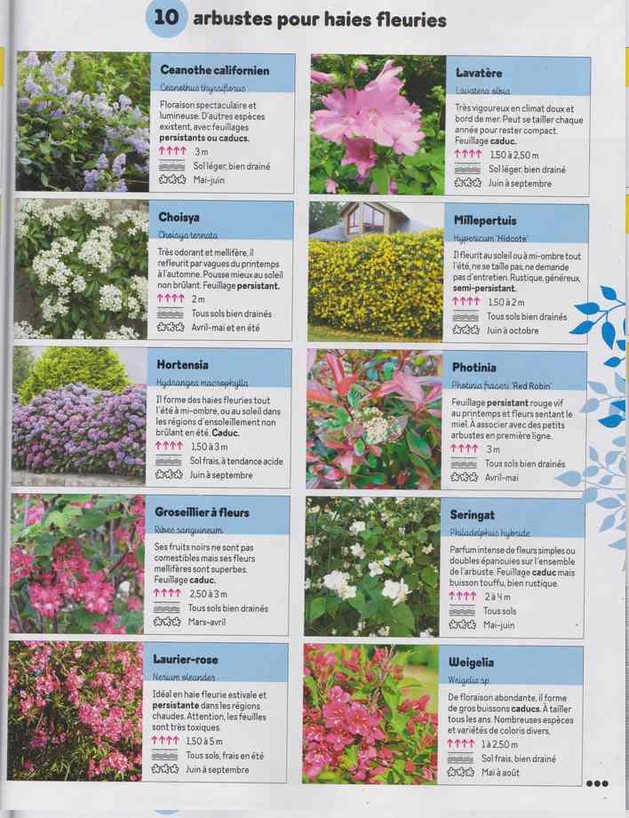 au jardin - Page 29 2c21