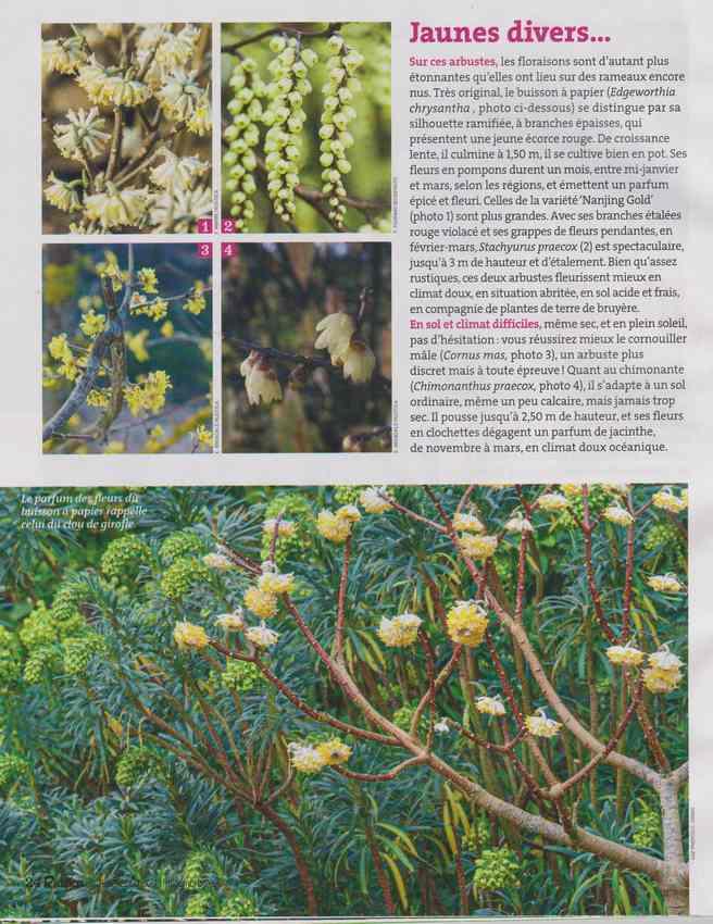 au jardin - Page 6 2d11