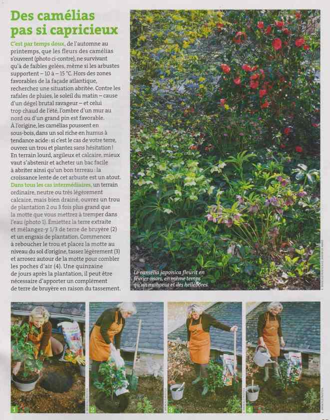 au jardin - Page 6 2e11