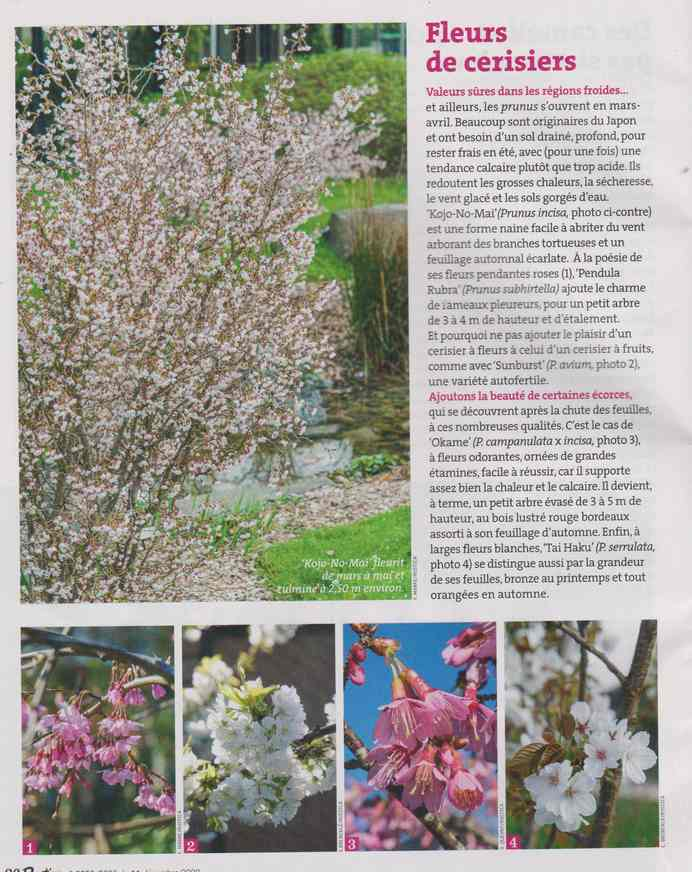 au jardin - Page 6 2f11