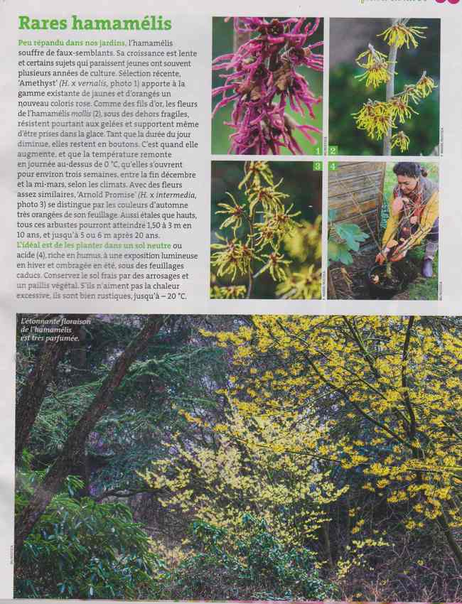 au jardin - Page 6 2g11