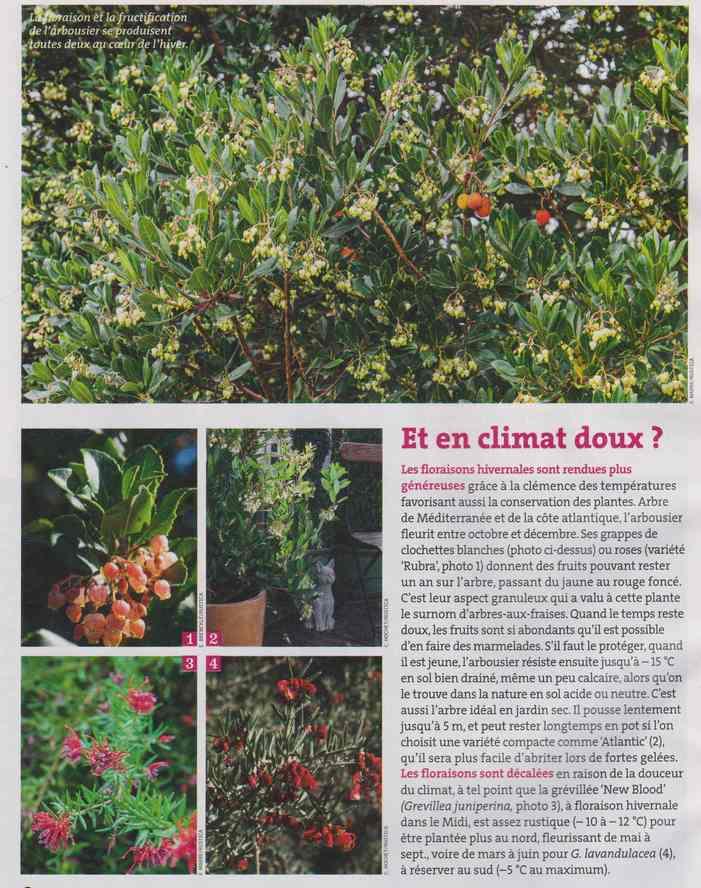 au jardin - Page 6 2h11