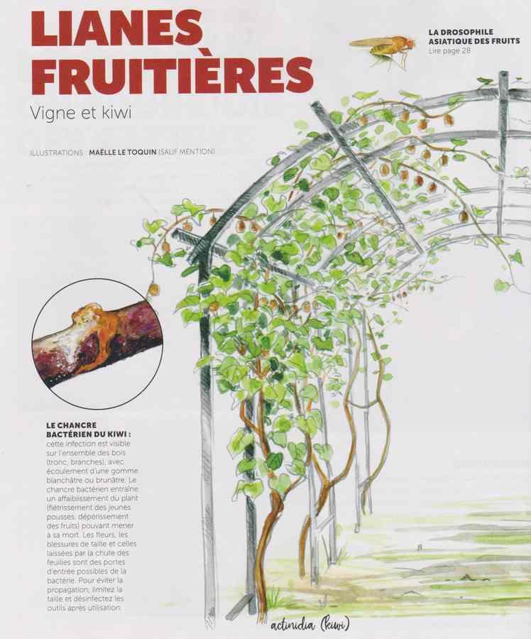 les maladies au jardin - Page 3 3011