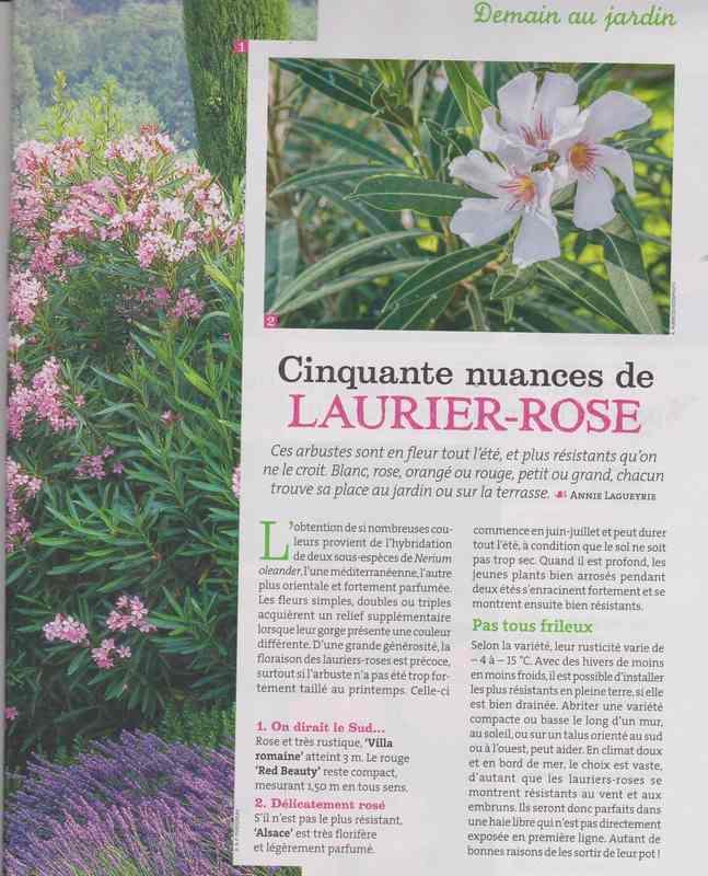 au jardin - Page 36 310