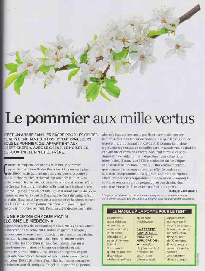 les plantes qui soignent - Page 11 311