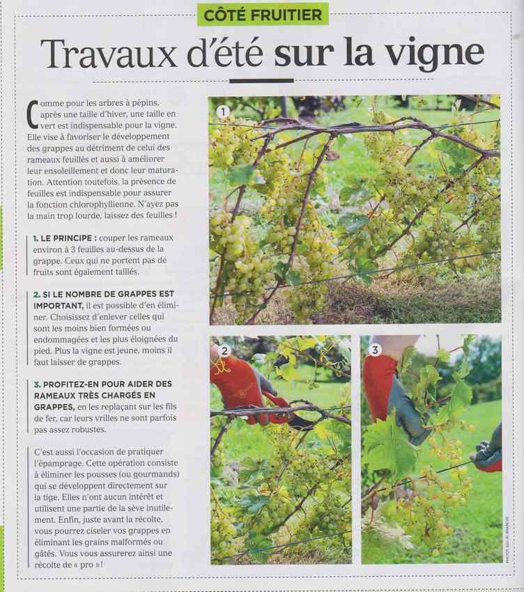 au jardin - Page 40 321