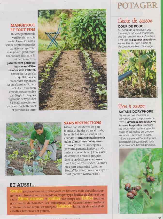 au jardin - Page 40 321110